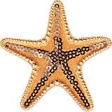 Starfish - Sequin