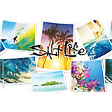 Salt Life® - Collage