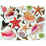 Shark Teeth and Starfish