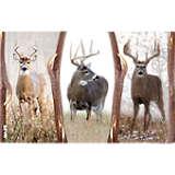 Deer Trio