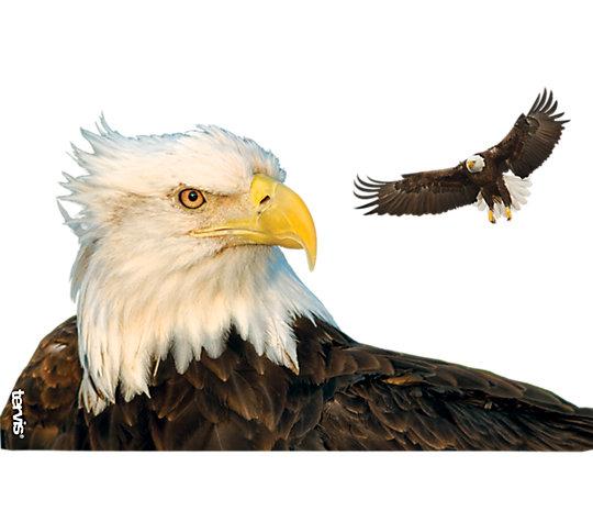 Eagle image number 1