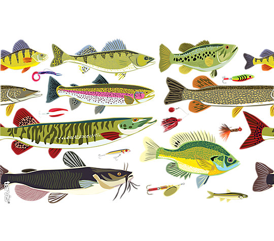 Freshwater Fish and Lures image number 1